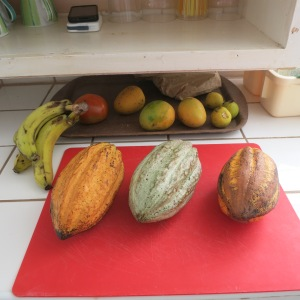The cacao pods we brought home