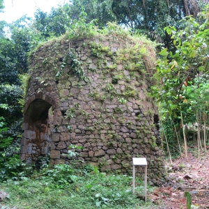 Ruins of a windmill at Bois Cotlette. They harnessed the windmill to squeeze the juice out of sugarcane. Note the cacao tree on the right.