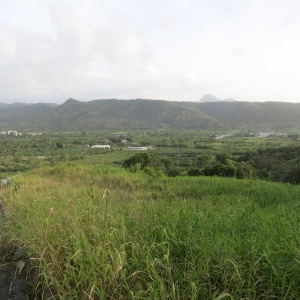 Just south of Marigot lies the Roseau Valley with more flat land and big agriculture (all bananas) than was apparent in Dominica