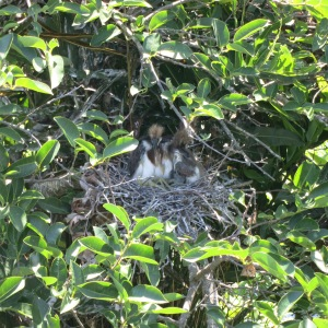 This nest was about 6 feet from a boardwalk in a local nature preserve