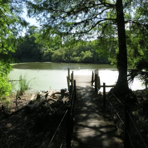 The approach to a sinkhole in Fakahatchee Strand filled with alligators