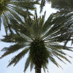 Palms make lovely patterns and their trunks often are a host to multiple other plants.