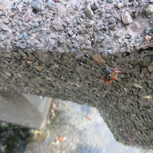 The thing with red pointy parts is a Spiny Orb-weaver spider. They are everywhere.