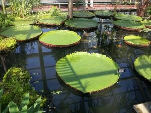 Brooklyn Botanic Garden is full of amazing plants