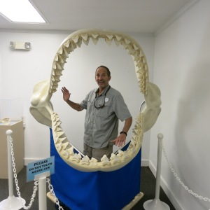 The Sandoway House Nature Center in Delray Beach had an exhibit of 100 shark jaws