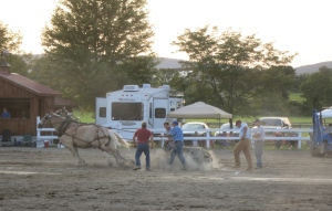 Draft horses testing their strength at Ulster County Fair