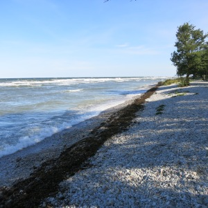 A rough day on the Baltic, with waves breaking on this rare gravel beach in Gotland.