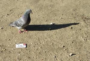Special delivery, 'Par Pigeon!'