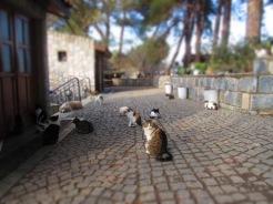 Stray cats at Ephesus.
