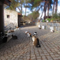 Stray cats at Ephesus.