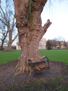 This tree and bench have been friends for a long time. They have become quite attached to each other.