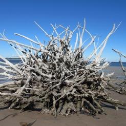 Boneyard Beach, Big Talbot Island State Park