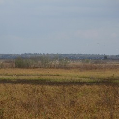 A flock of birds taking off at Paynes Prairie Preserve State Park.