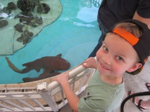 Jackson and some nurse sharks at a nature center.
